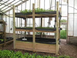 A small, portable aquaponics system. Photo by Charlie Vinz.