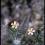 small pink and yellow flowers