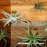 air plants with butterfly