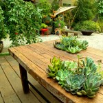 succulents in table top