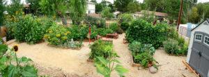 Mariposa School Garden. Photo by Bill Kositzky.