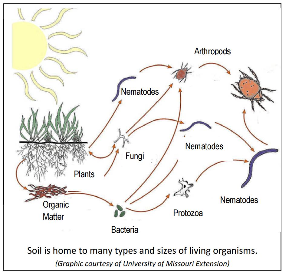 Gardening in nevada 39 s soils for Soil organisms