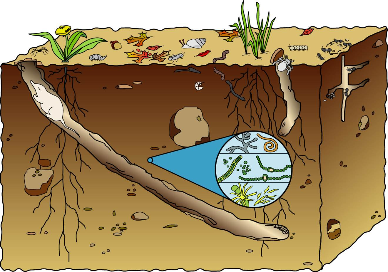 Soil is alive for Soil clipart