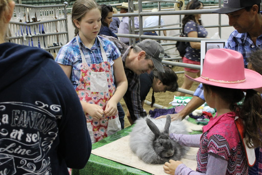 kids petting rabbits