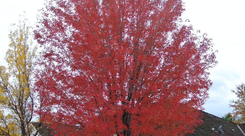 Autumn Landscape To Dos