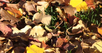 Turn Golden Fall Leaves into Garden Gold with Composting