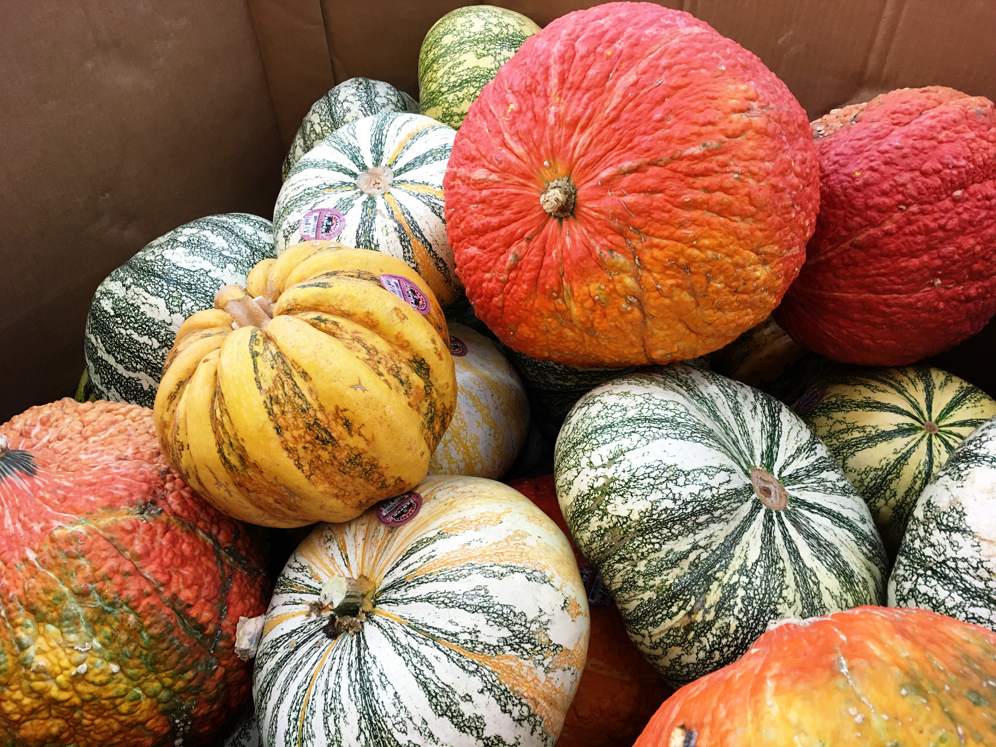 Pumpkin selection is a personal choice. Check out pumpkins of various shapes, sizes, colors and textures along your journey to a perfect pumpkin. (Photo: Photo by Ashley Andrews.)