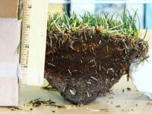 If a lawn sample reveals a thick layer of plant matter with little soil, thatch may be the problem. Aeration can help. Photo by Wendy Hanson Mazet.