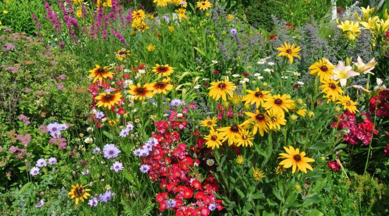 Landscape Design Principles Build Four Seasons of Interest