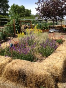 garden bed made from hay stacks