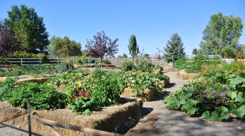 Community Gardening Makes Reno Bloom