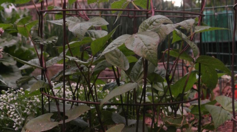 Planting Summer Veggies