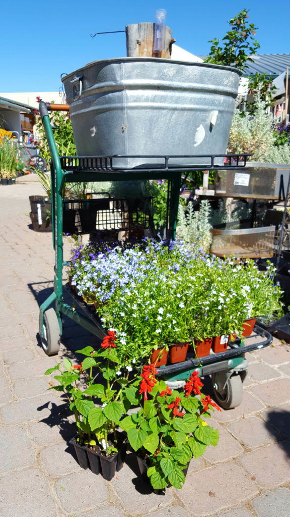 flowers and a metal tub