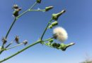 Spring Weeds to Control Now
