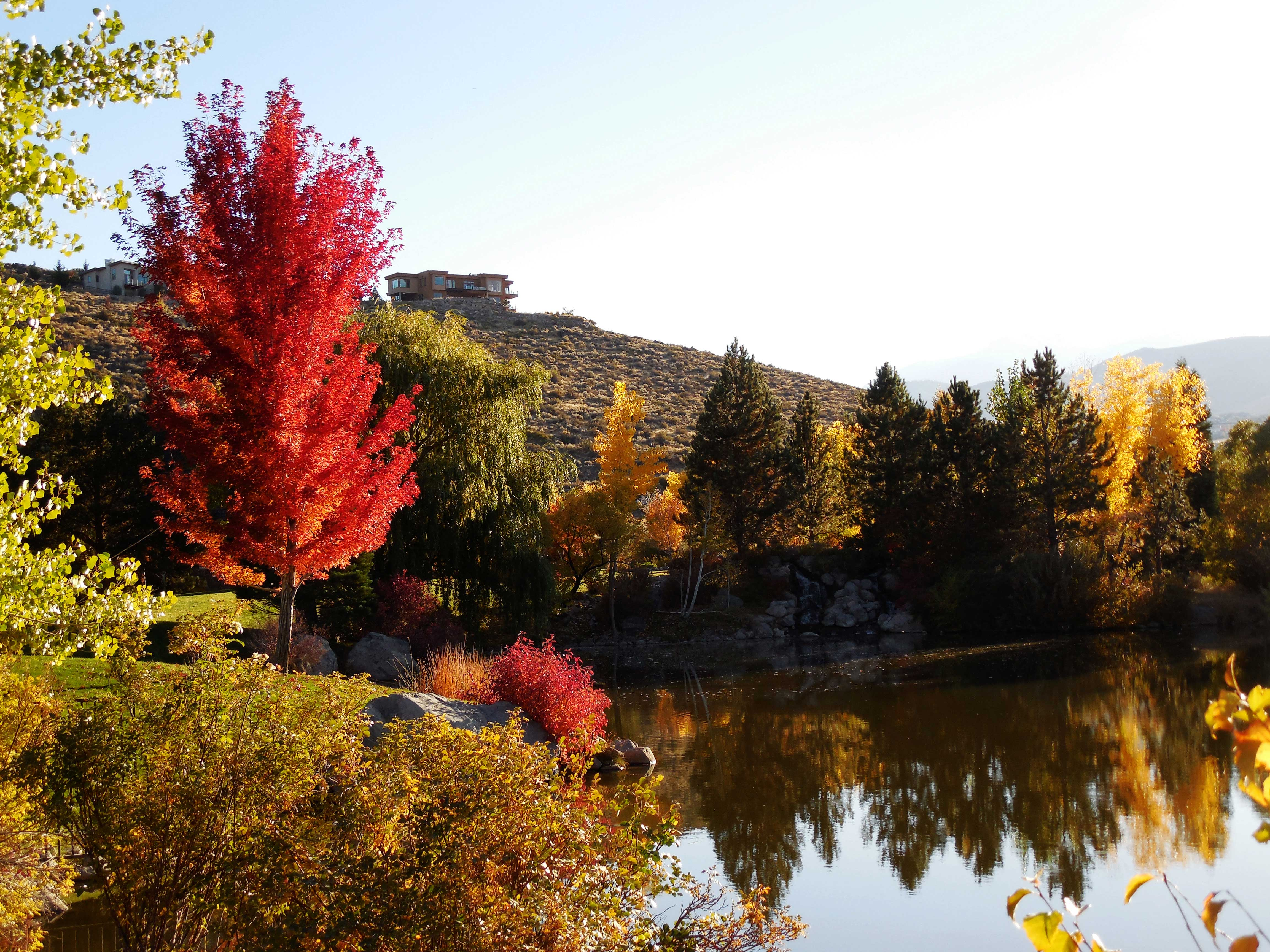 Warm sunny days with cool but not freezing nights bring out brighter colors in our trees. Photo by Wendy Hanson Mazet.