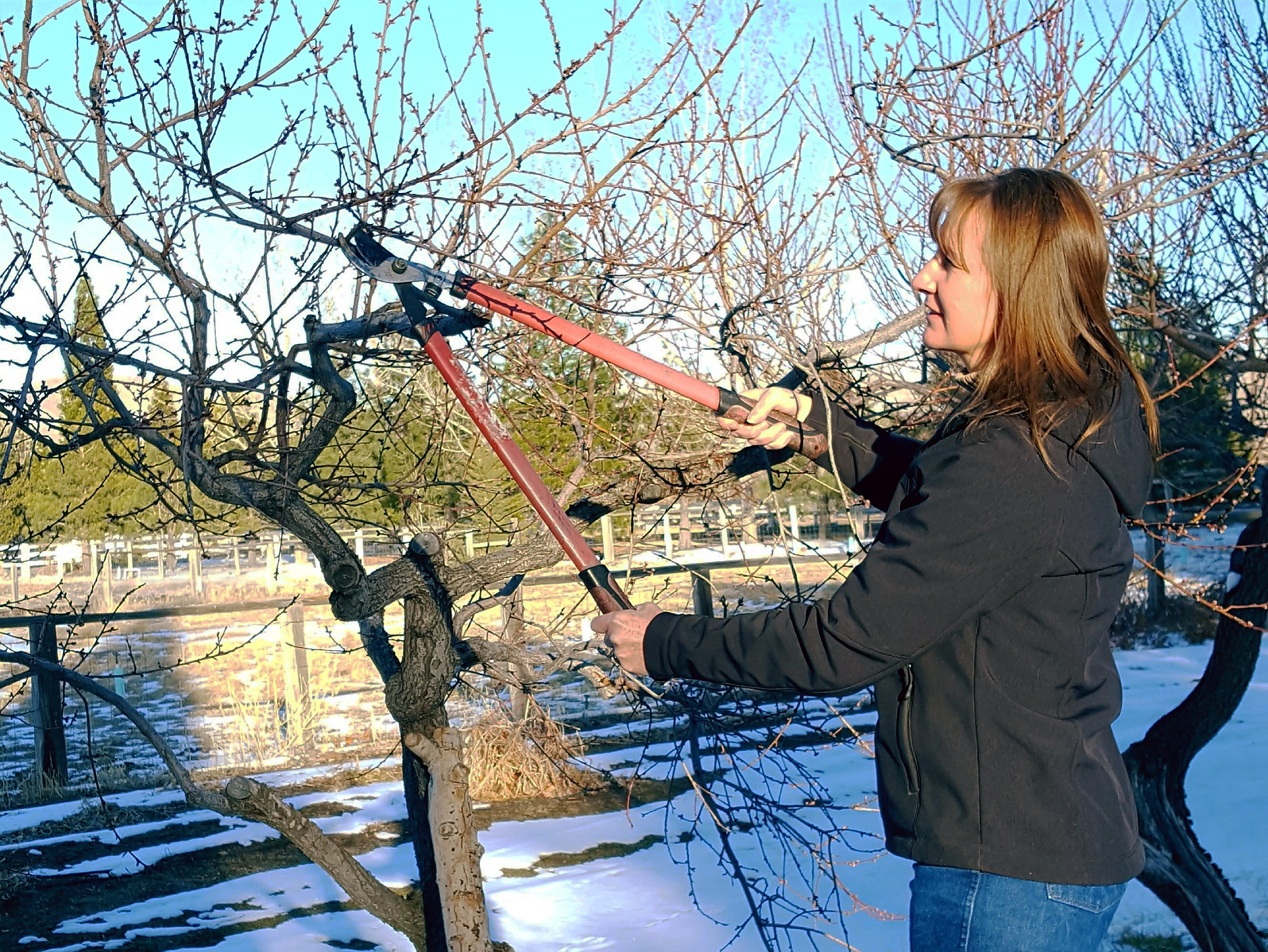 woman cutting tree branch with loppers