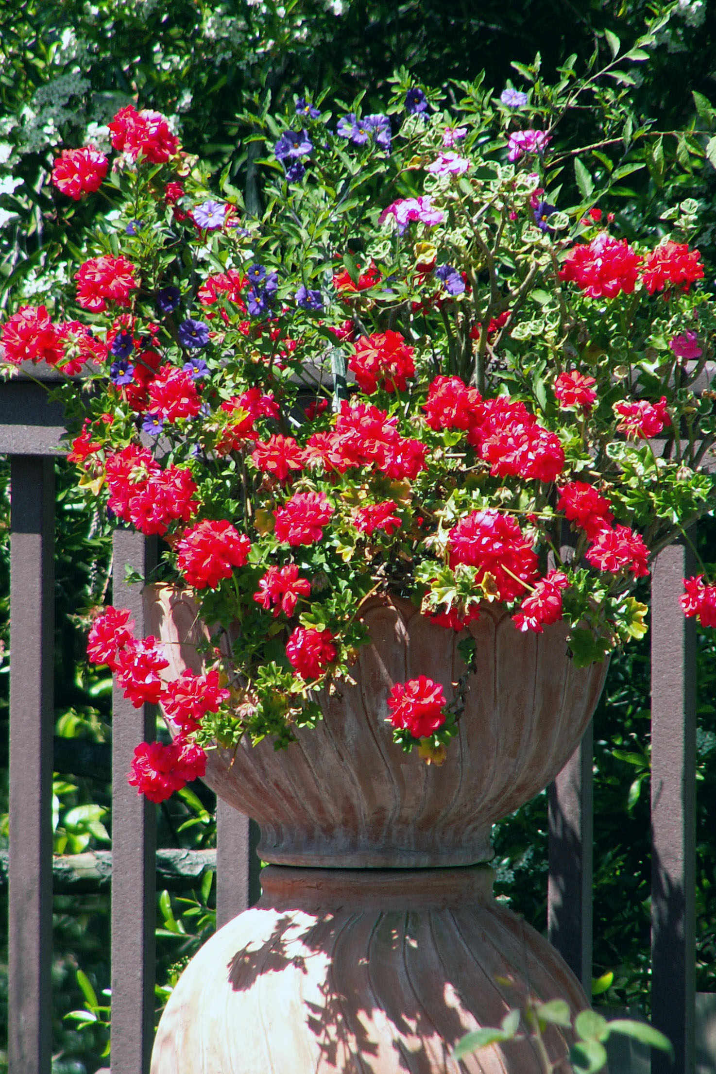 red flowering plant in pot