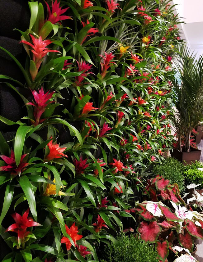 bromeliads in pocket wall hanging