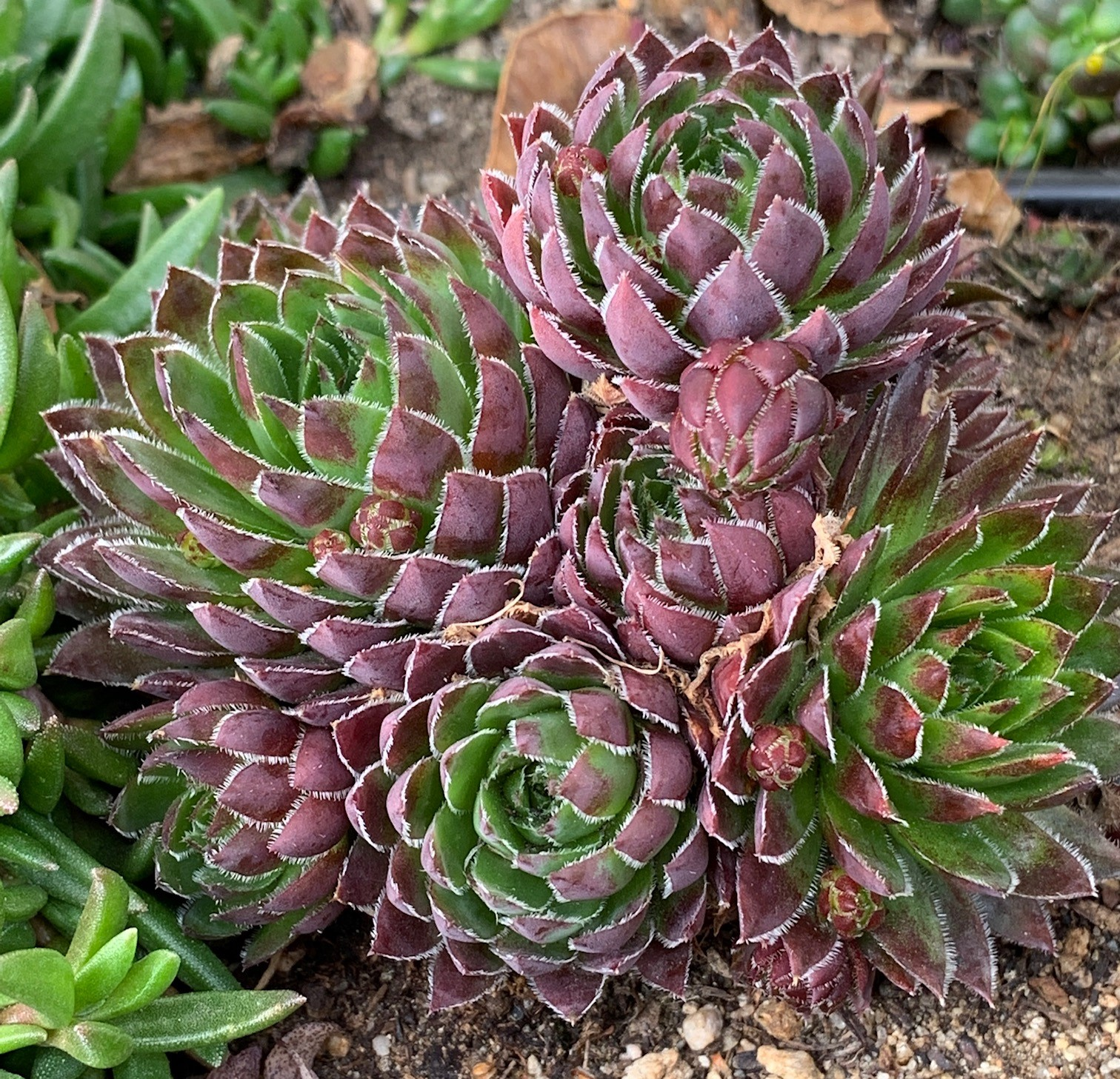 The wonderful world of succulents
