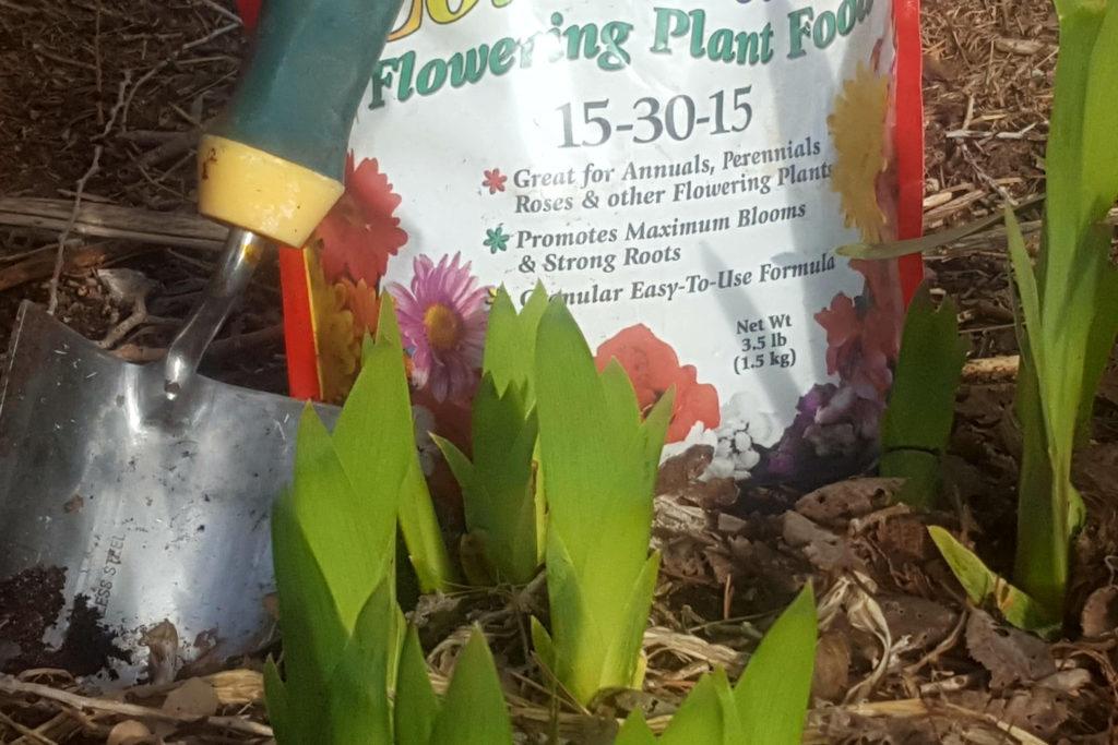 fertilizer and irises