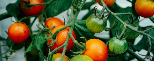 Home Horticulture Programs
