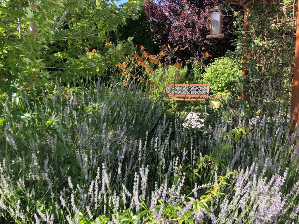 perennials and bench
