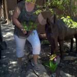 woman touching donkey sculpture