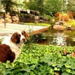 dog sitting in plants near garden pond