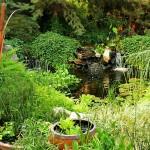 pond in lush green garden