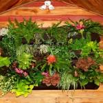 plants in wall