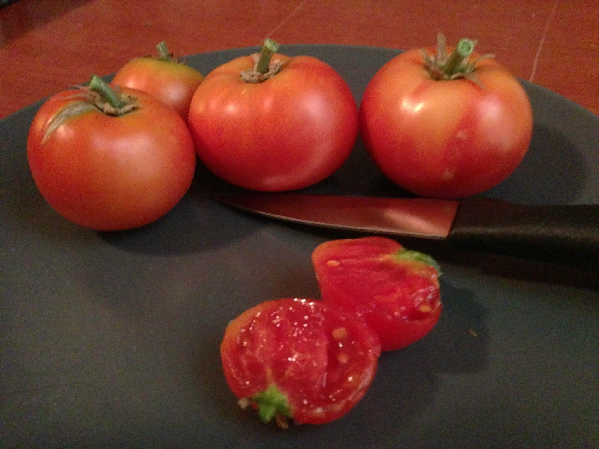 Tomato Woes