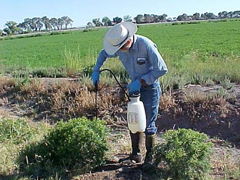 man applying pesticides from pump