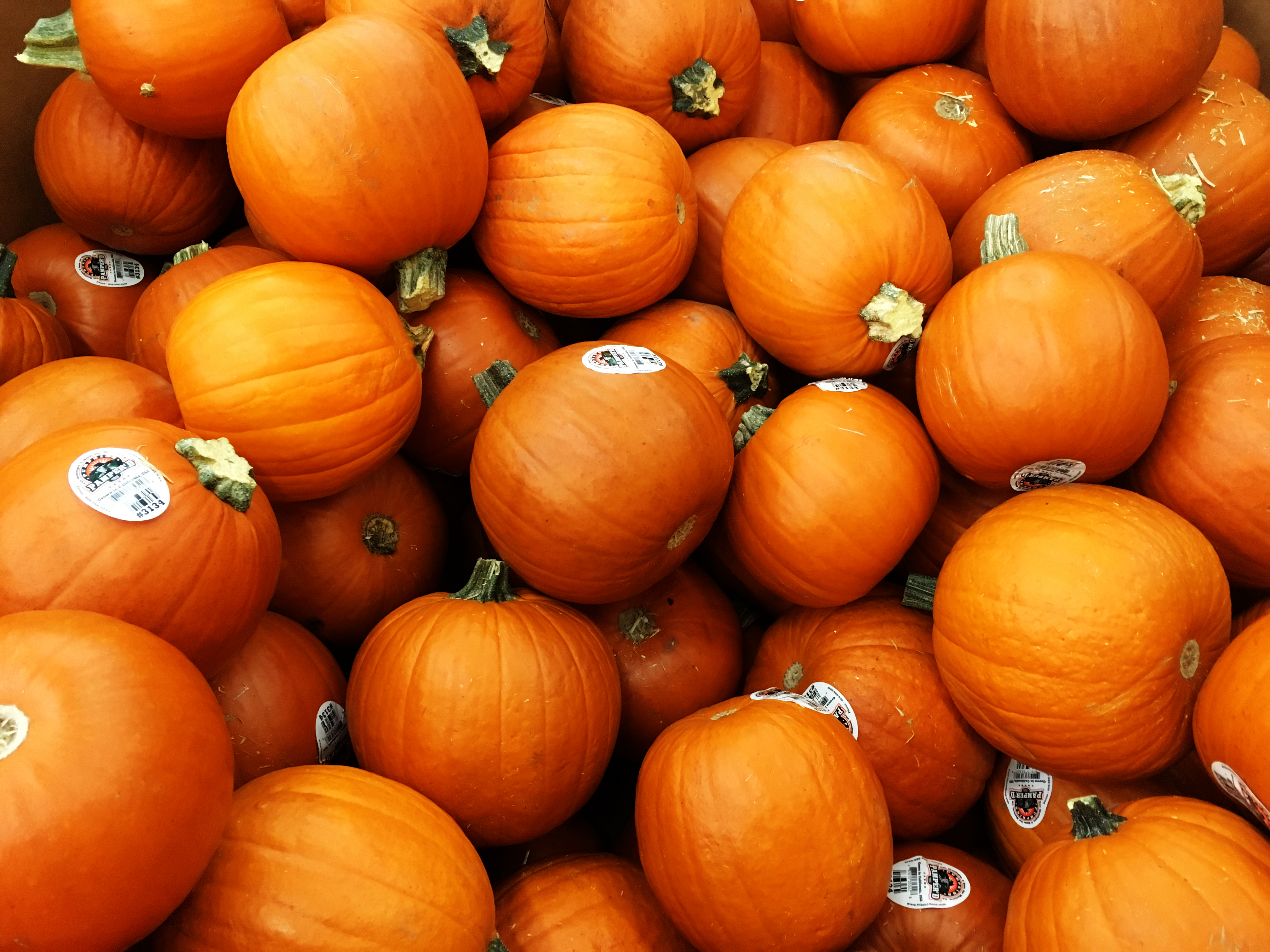 Decorating Eating and Composting for a Sustainable Halloween