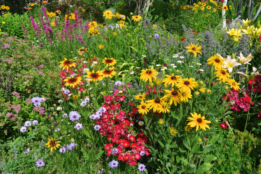 garden with multi-colored flowers