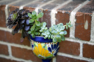 succulent in decorative pot