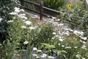 ornamental landscapes with wildflowers
