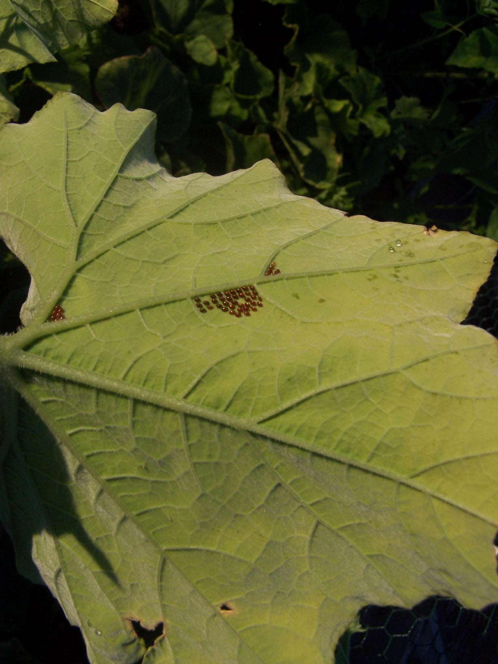 Start scouting for vegetable garden insect pests now