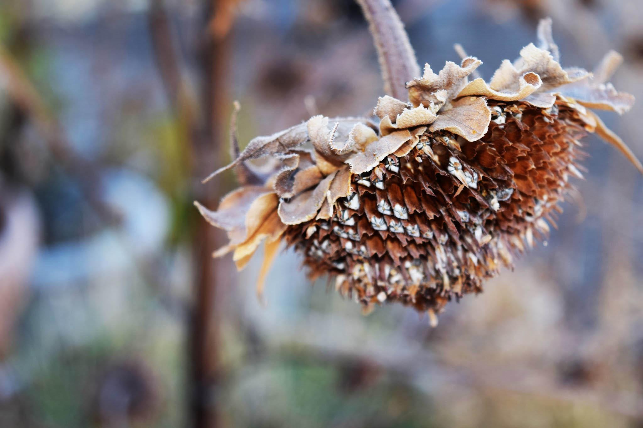 Strategic Garden Cleanup Creates Garden Homes for Pollinators