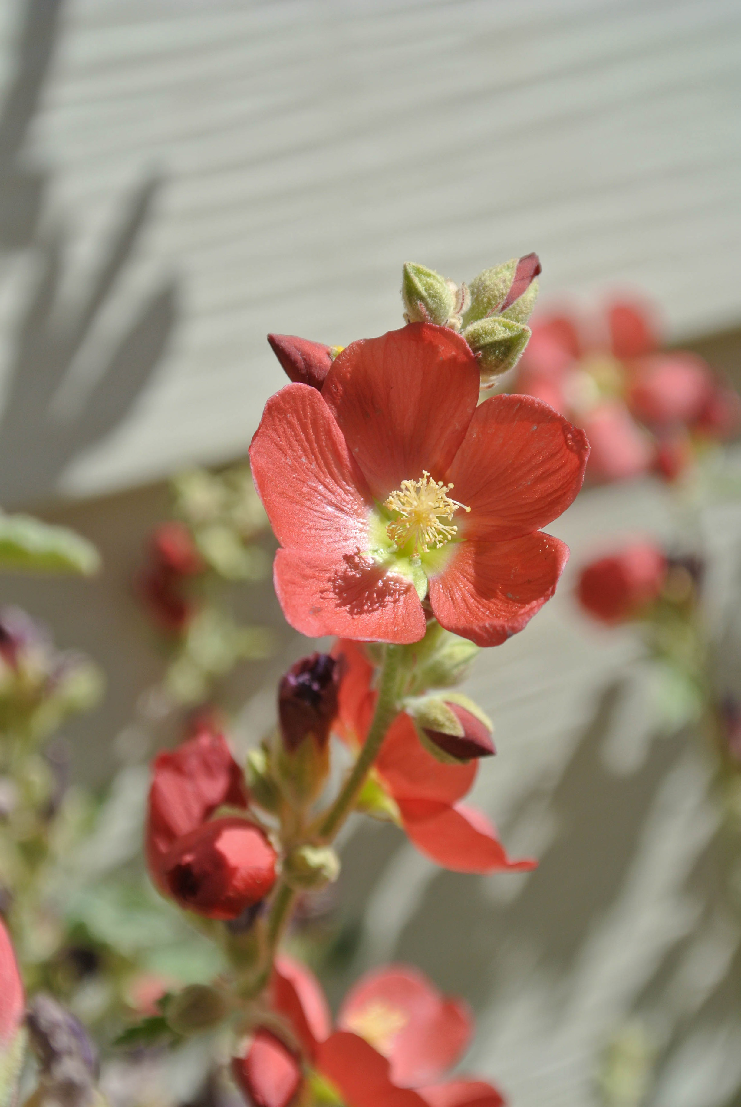 Using native plants can save water and protect bees