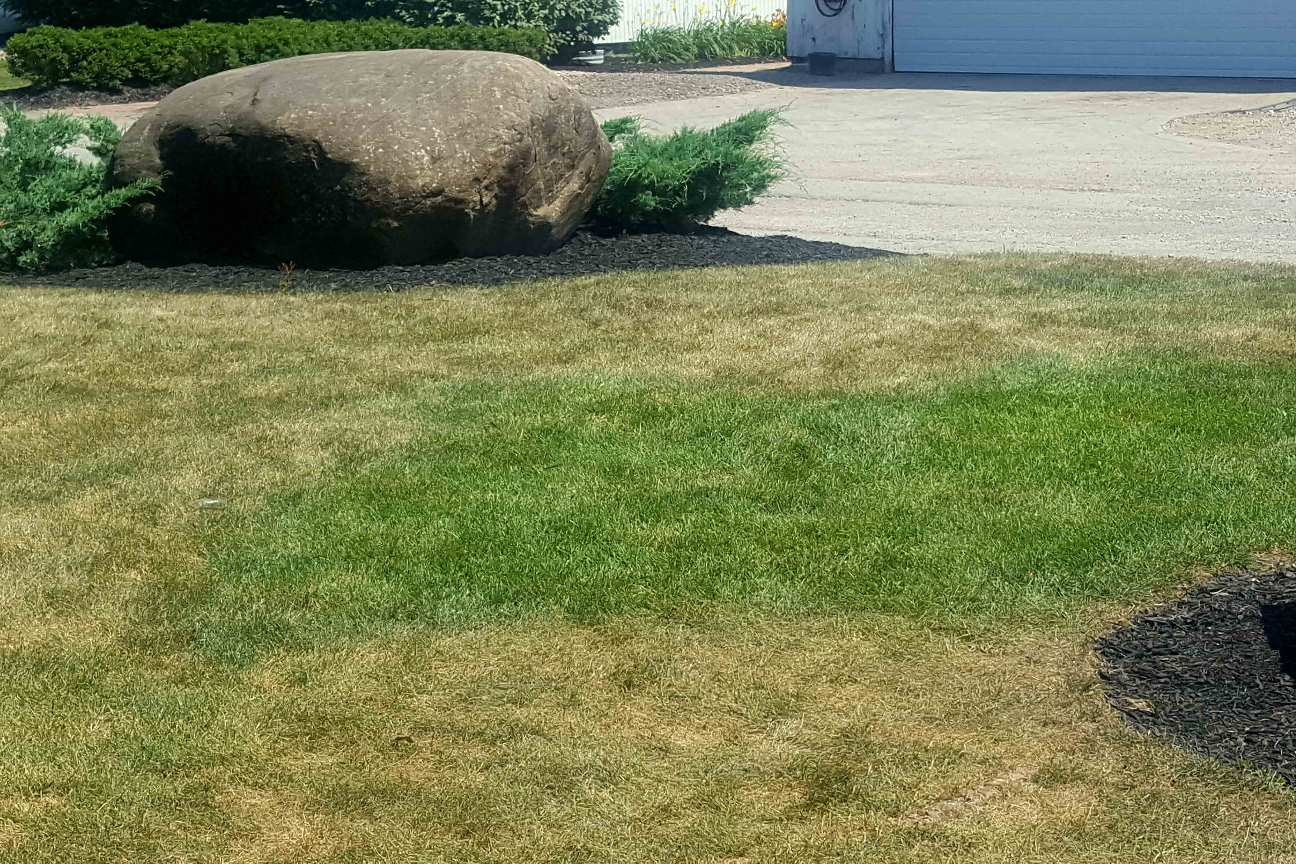 Brown lawns in summer caused by improper watering