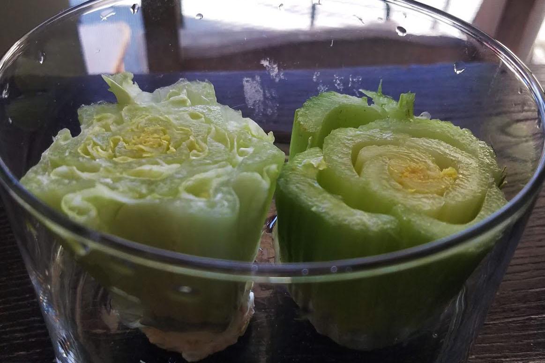 Bring vegetable growing indoors this winter