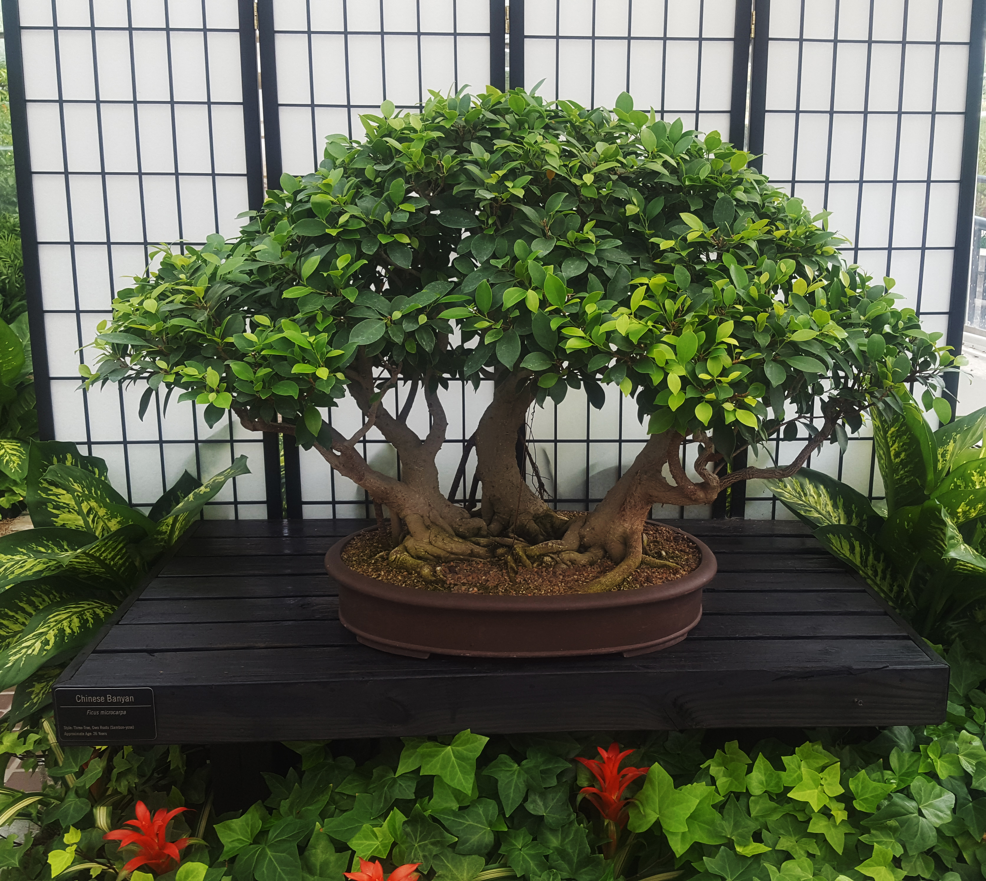 Bored with run-of-the-mill houseplants? Try bonsai