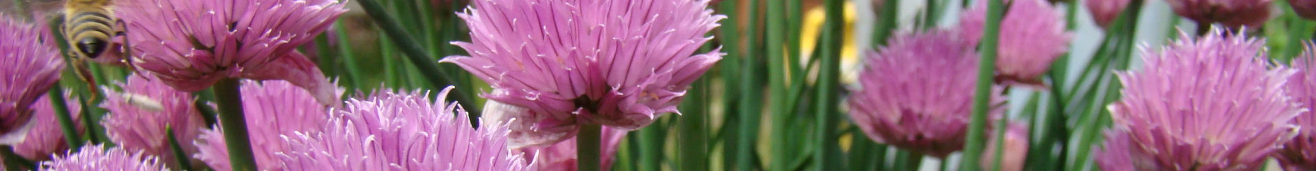 Growing outdoor herbs